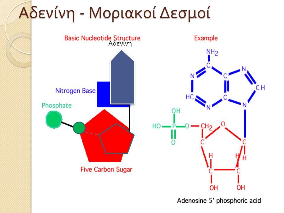 Αδενίνη Αδενίνη - Μοριακοί Δεσμοί