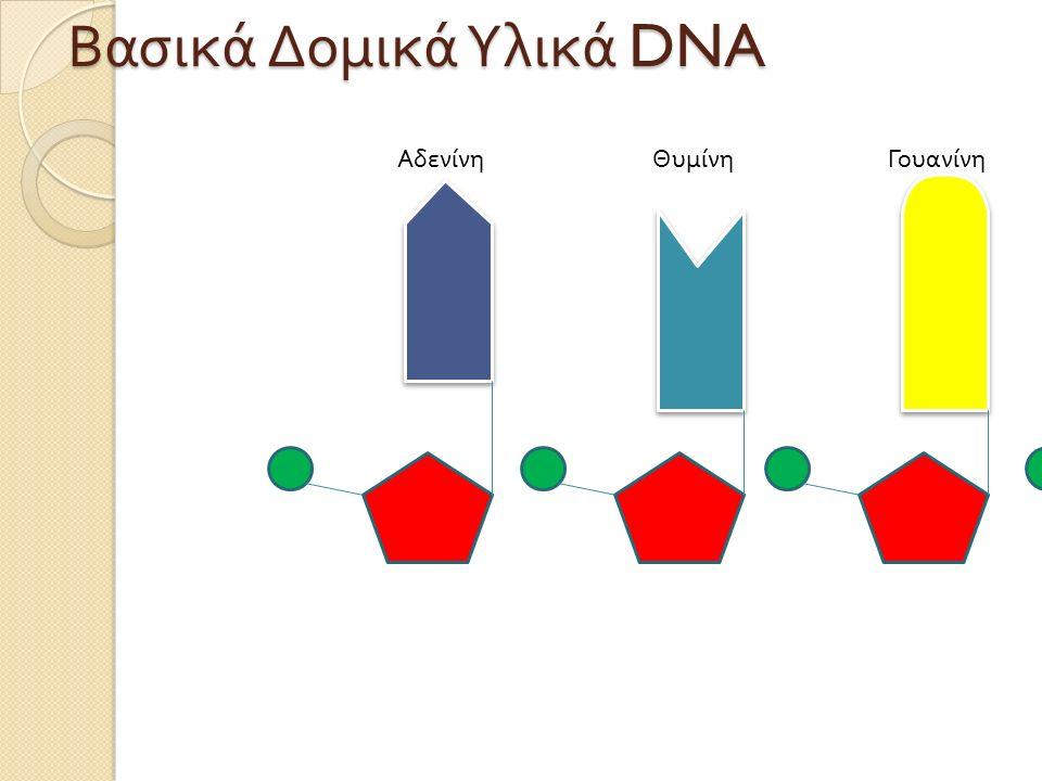 ΑδενίνηΘυμίνηΓουανίνηΚυτοσίνη Βασικά Δομικά Υλικά DNA