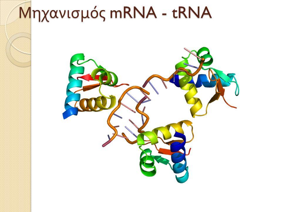 Μηχανισμός mRNA - tRNA