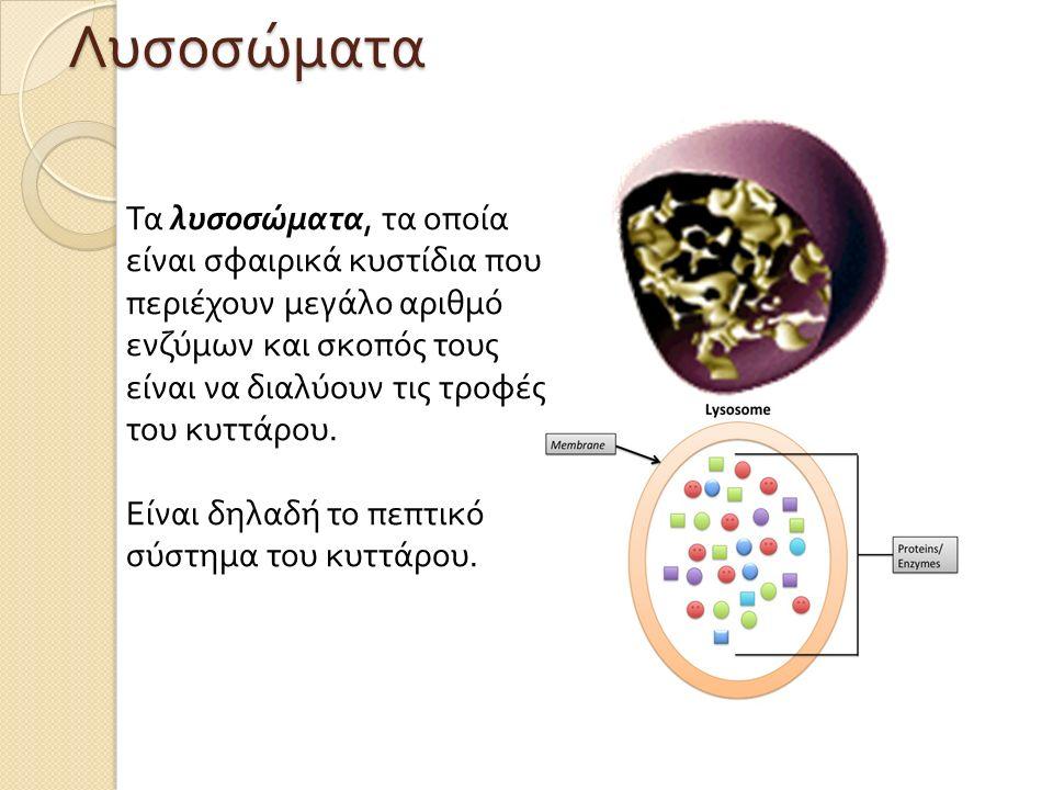 Τα λυσοσώματα, τα οποία είναι σφαιρικά κυστίδια που περιέχουν μεγάλο αριθμό ενζύμων και σκοπός τους είναι να διαλύουν τις τροφές του κυττάρου.