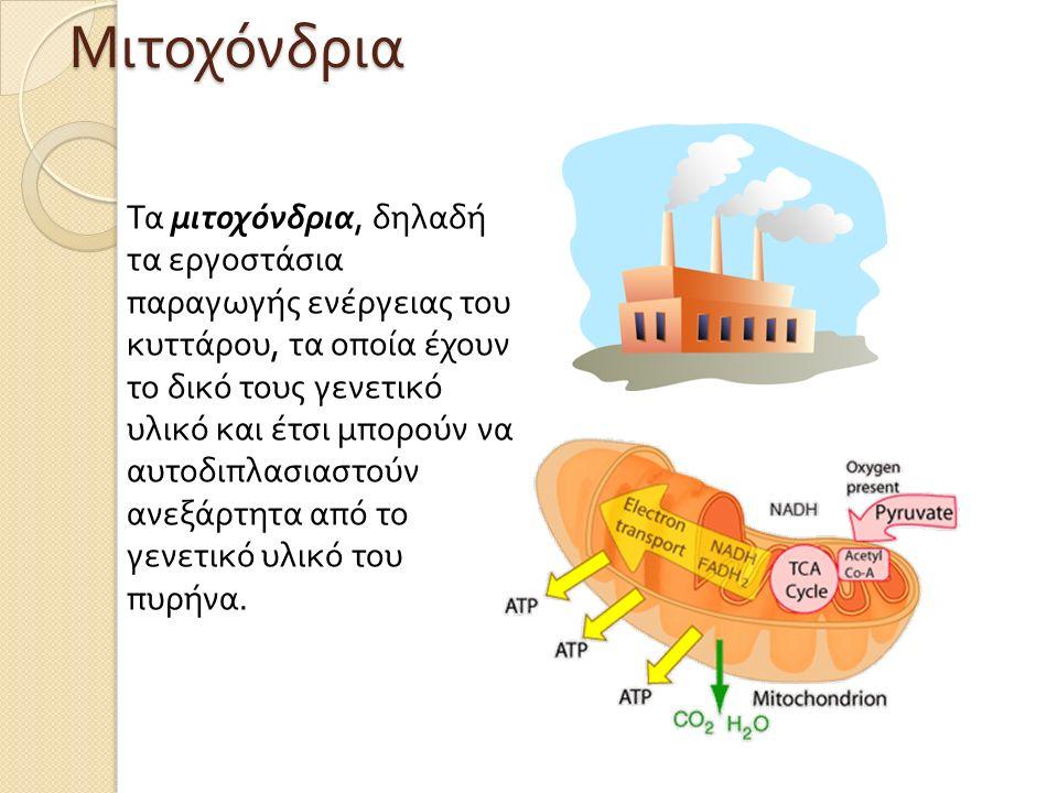Τα μιτοχόνδρια, δηλαδή τα εργοστάσια παραγωγής ενέργειας του κυττάρου, τα οποία έχουν το δικό τους γενετικό υλικό και έτσι μπορούν να αυτοδιπλασιαστούν ανεξάρτητα από το γενετικό υλικό του πυρήνα.Μιτοχόνδρια