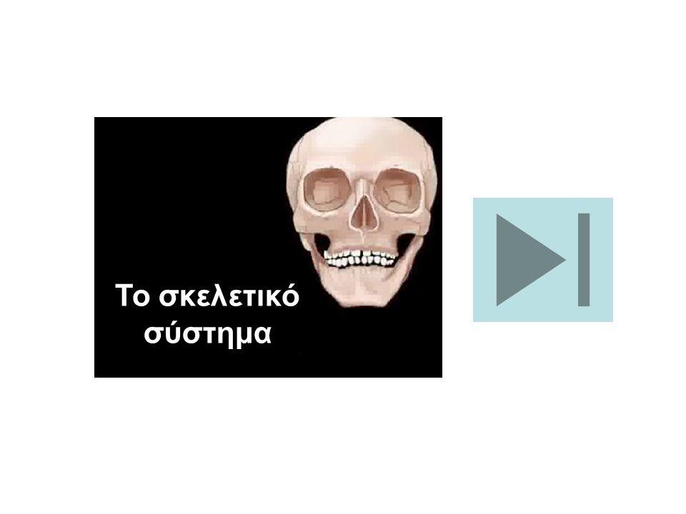 Το σκελετικό σύστημα