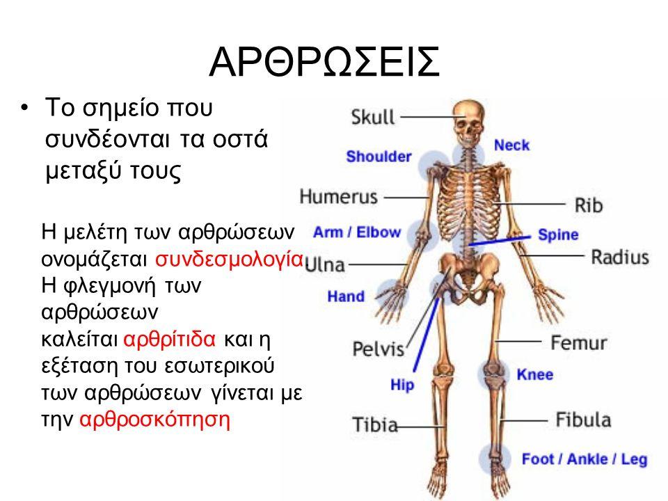 ΑΡΘΡΩΣΕΙΣ Το σημείο που συνδέονται τα οστά μεταξύ τους Η μελέτη των αρθρώσεων ονομάζεται συνδεσμολογία. Η φλεγμονή των αρθρώσεων καλείται αρθρίτιδα κα
