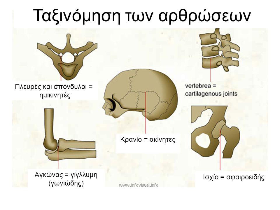 Πλευρές και σπόνδυλοι = ημικινητές Κρανίο = ακίνητες Αγκώνας = γίγλλυμη (γωνιώδης) Ισχίο = σφαιροειδής Ταξινόμηση των αρθρώσεων