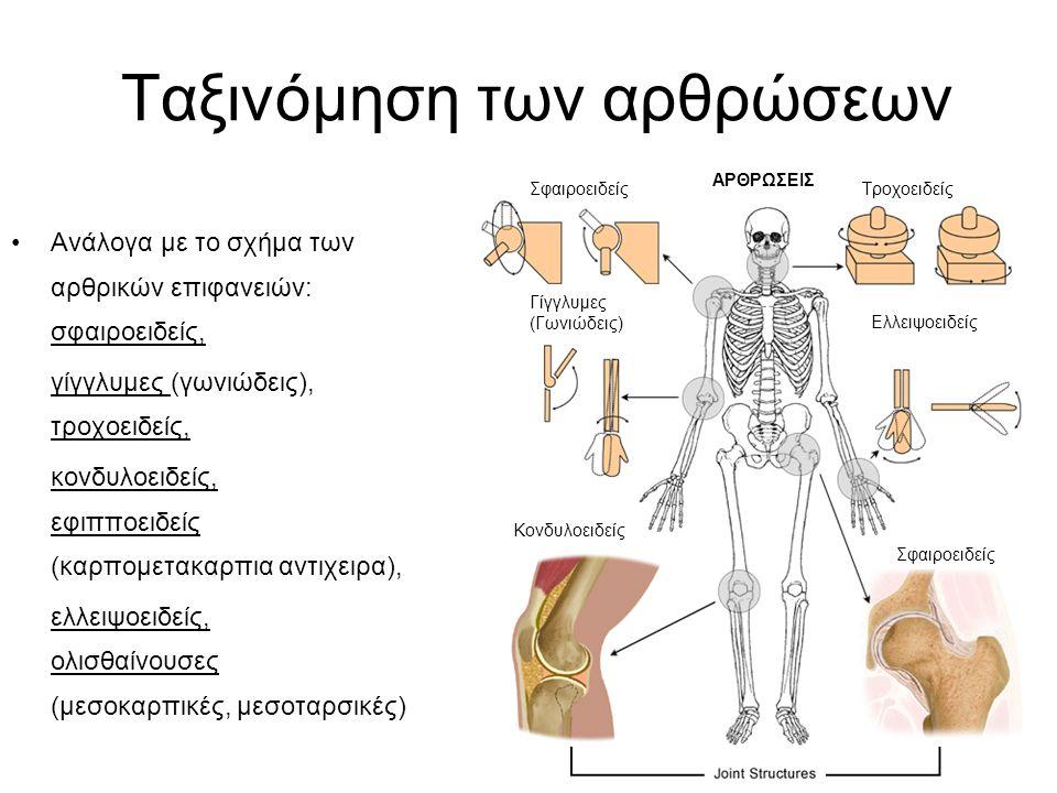 Ανάλογα με το σχήμα των αρθρικών επιφανειών: σφαιροειδείς, γίγγλυμες (γωνιώδεις), τροχοειδείς, κονδυλοειδείς, εφιπποειδείς (καρπομετακαρπια αντιχειρα)
