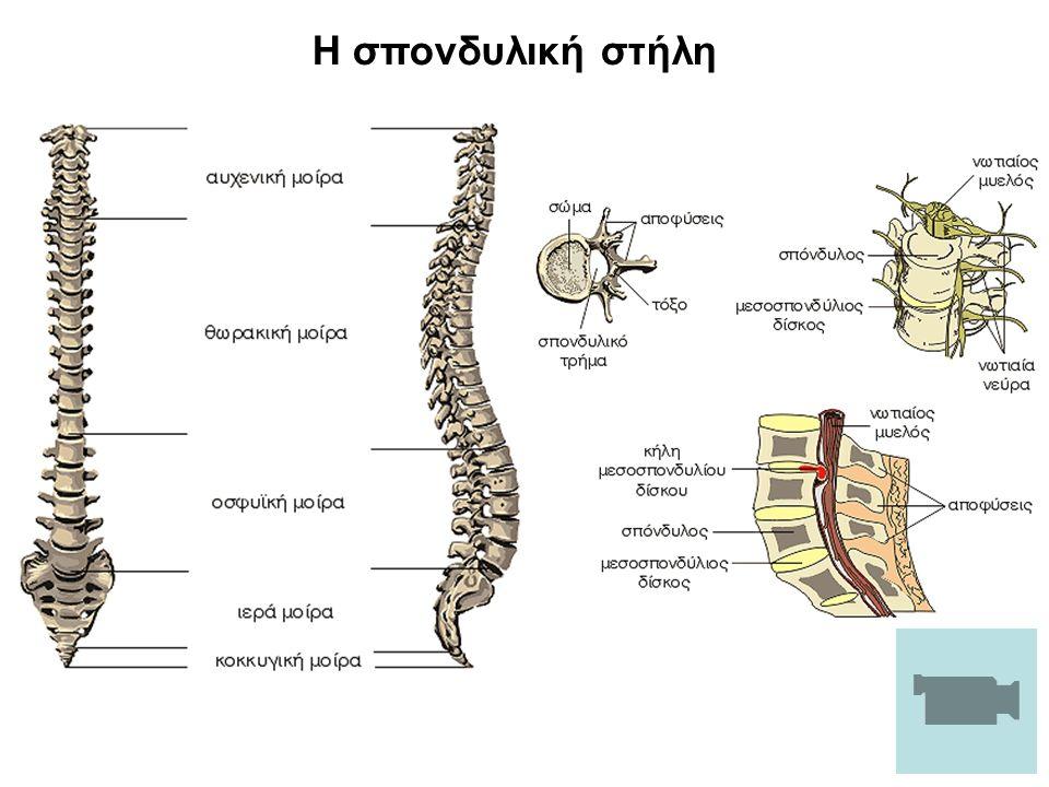 Η σπονδυλική στήλη