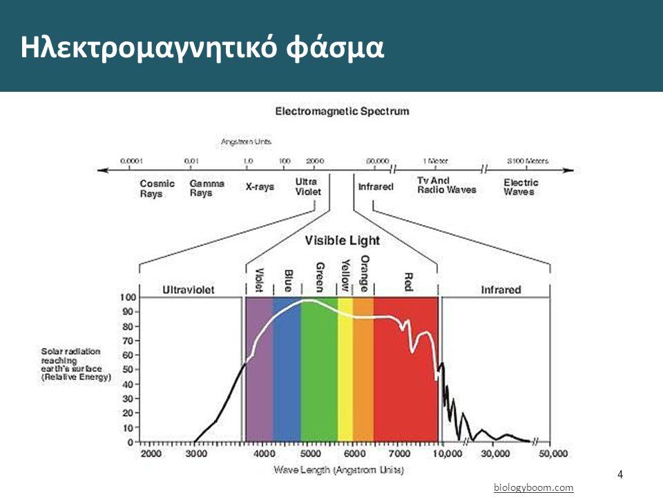 Ηλεκτρομαγνητικό φάσμα 4 biologyboom.com