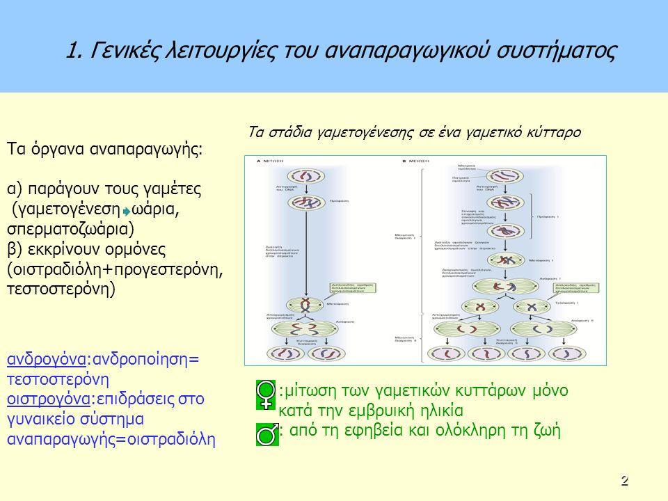 Κεντρικός έλεγχος της αναπαραγωγικής λειτουργίας του θήλεος LH, FSH θήκη, κοκκιώδη Οιστρογόνα Προγεστερόνη ανασταλτίνη
