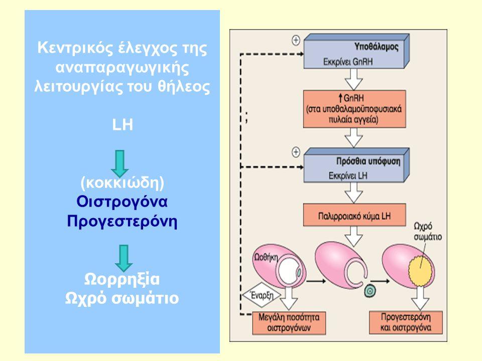 Κεντρικός έλεγχος της αναπαραγωγικής λειτουργίας του θήλεος LH (κοκκιώδη) Οιστρογόνα Προγεστερόνη Ωορρηξία Ωχρό σωμάτιο