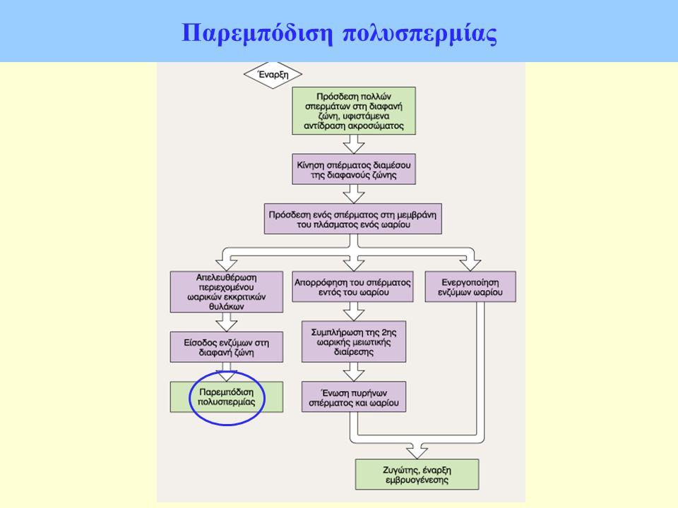 Παρεμπόδιση πολυσπερμίας