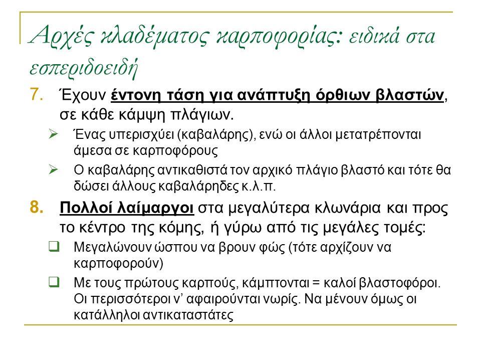 Αρχές κλαδέματος καρποφορίας: ειδικά στα εσπεριδοειδή 7. Έχουν έντονη τάση για ανάπτυξη όρθιων βλαστών, σε κάθε κάμψη πλάγιων.  Ένας υπερισχύει (καβα