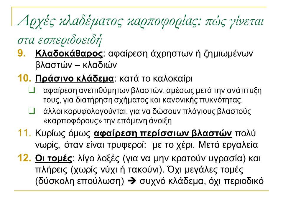Αρχές κλαδέματος καρποφορίας: πώς γίνεται στα εσπεριδοειδή 9. Κλαδοκάθαρος: αφαίρεση άχρηστων ή ζημιωμένων βλαστών – κλαδιών 10. Πράσινο κλάδεμα: κατά