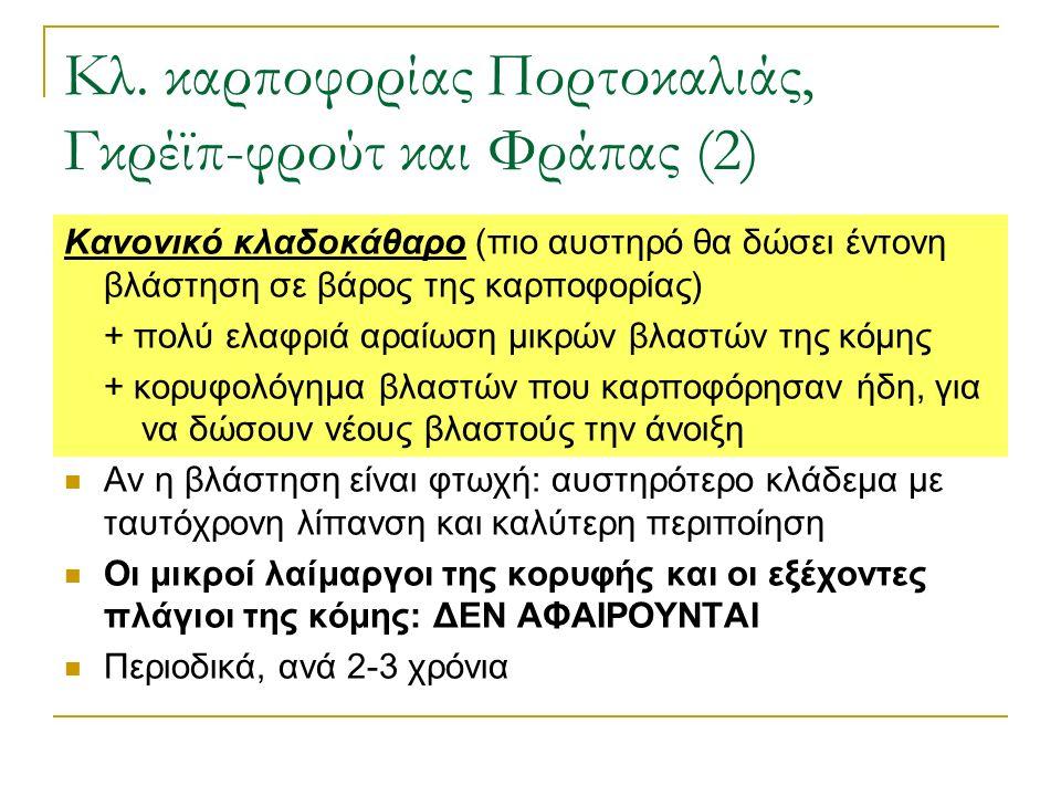 Κλ. καρποφορίας Πορτοκαλιάς, Γκρέϊπ-φρούτ και Φράπας (2) Κανονικό κλαδοκάθαρο (πιο αυστηρό θα δώσει έντονη βλάστηση σε βάρος της καρποφορίας) + πολύ ε