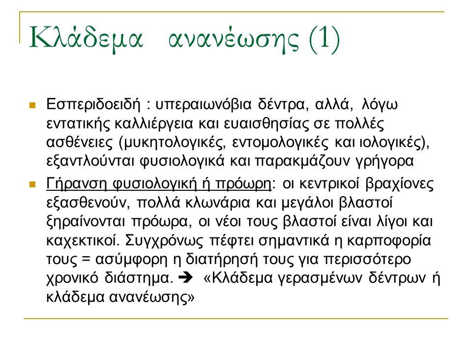 Κλάδεμα ανανέωσης (1) Εσπεριδοειδή : υπεραιωνόβια δέντρα, αλλά, λόγω εντατικής καλλιέργεια και ευαισθησίας σε πολλές ασθένειες (μυκητολογικές, εντομολογικές και ιολογικές), εξαντλούνται φυσιολογικά και παρακμάζουν γρήγορα Γήρανση φυσιολογική ή πρόωρη: οι κεντρικοί βραχίονες εξασθενούν, πολλά κλωνάρια και μεγάλοι βλαστοί ξηραίνονται πρόωρα, οι νέοι τους βλαστοί είναι λίγοι και καχεκτικοί.