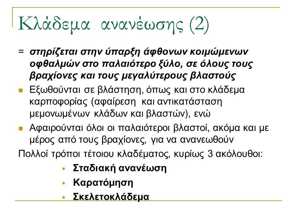 Κλάδεμα ανανέωσης (2) = στηρίζεται στην ύπαρξη άφθονων κοιμώμενων οφθαλμών στο παλαιότερο ξύλο, σε όλους τους βραχίονες και τους μεγαλύτερους βλαστούς Εξωθούνται σε βλάστηση, όπως και στο κλάδεμα καρποφορίας (αφαίρεση και αντικατάσταση μεμονωμένων κλάδων και βλαστών), ενώ Αφαιρούνται όλοι οι παλαιότεροι βλαστοί, ακόμα και με μέρος από τους βραχίονες, για να ανανεωθούν Πολλοί τρόποι τέτοιου κλαδέματος, κυρίως 3 ακόλουθοι:  Σταδιακή ανανέωση  Καρατόμηση  Σκελετοκλάδεμα
