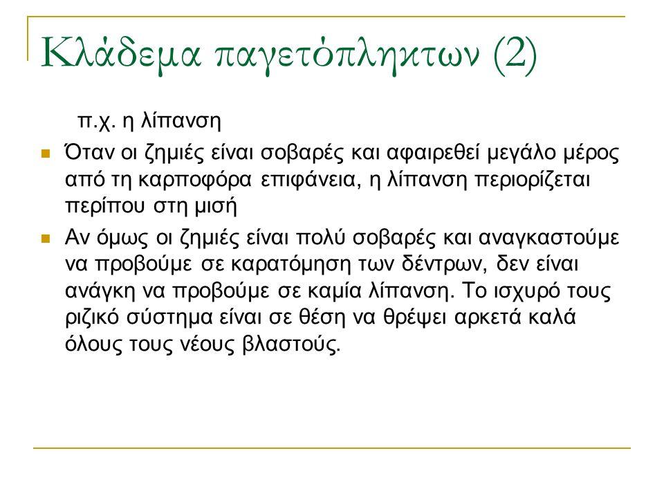Κλάδεμα παγετόπληκτων (2) π.χ. η λίπανση Όταν οι ζημιές είναι σοβαρές και αφαιρεθεί μεγάλο μέρος από τη καρποφόρα επιφάνεια, η λίπανση περιορίζεται πε