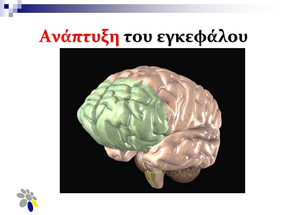 Ανάπτυξη του εγκεφάλου