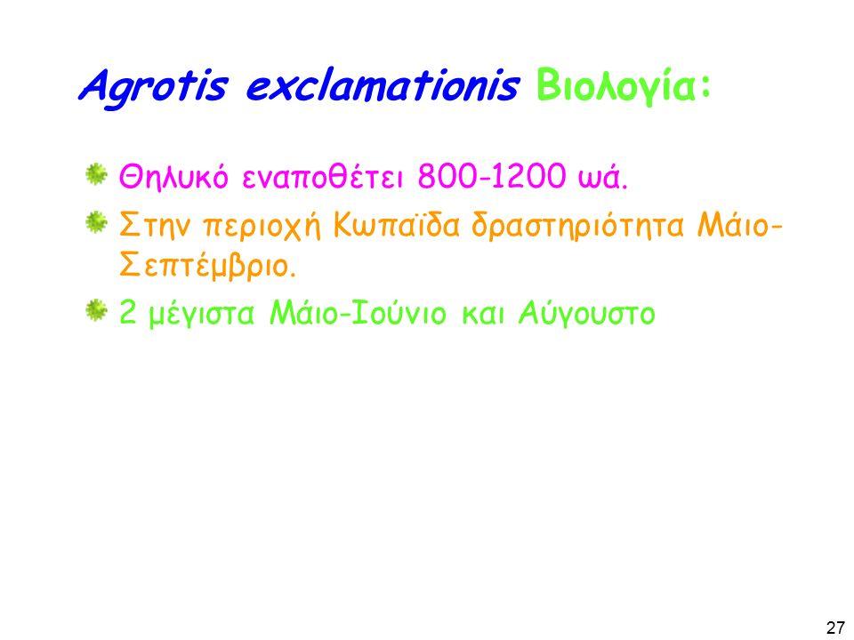 Agrotis exclamationis Βιολογία: Θηλυκό εναποθέτει 800-1200 ωά.