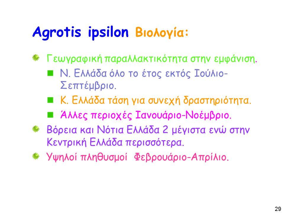 Agrotis ipsilon Βιολογία: Γεωγραφική παραλλακτικότητα στην εμφάνιση.