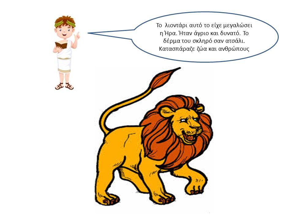 Το λιοντάρι αυτό το είχε μεγαλώσει η Ήρα. Ήταν άγριο και δυνατό.