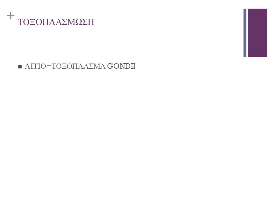 + ΤΟΞΟΠΛΑΣΜΩΣΗ ΑΙΤΙΟ = ΤΟΞΟΠΛΑΣΜΑ GONDII