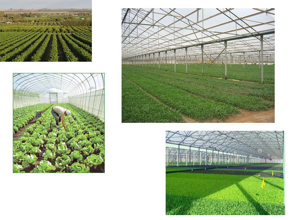 Το βέλτιστο μέγεθος της επιχείρησης: Μεταβάλλεται ανάλογα με την επιχειρηματική ικανότητα του γεωργού και από τη γενική και επαγγελματική του μόρφωση.