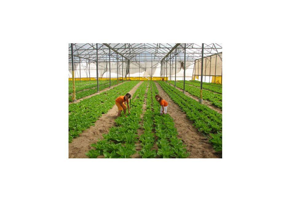 ΓΕΩΡΓΙΚΕΣ ΕΠΙΧΕΙΡΗΣΕΙΣ Γεωργική επιχείρηση είναι η τεχνοοικονομική μονάδα υπό ενιαία διαχείριση η οποία έχει σαν σκοπό την παραγωγή αγροτικών προϊόντων.