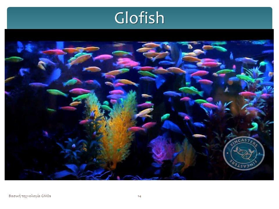Glofish Βασική τεχνολογία GMOs14