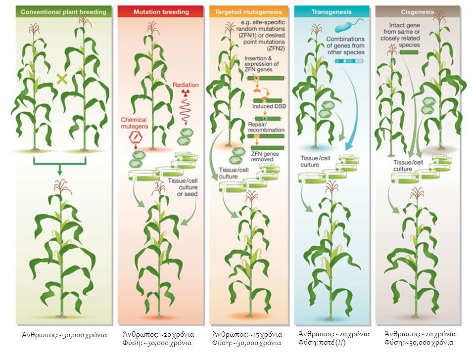 Βασική τεχνολογία GMOs34 Βακτηριοφάγοι