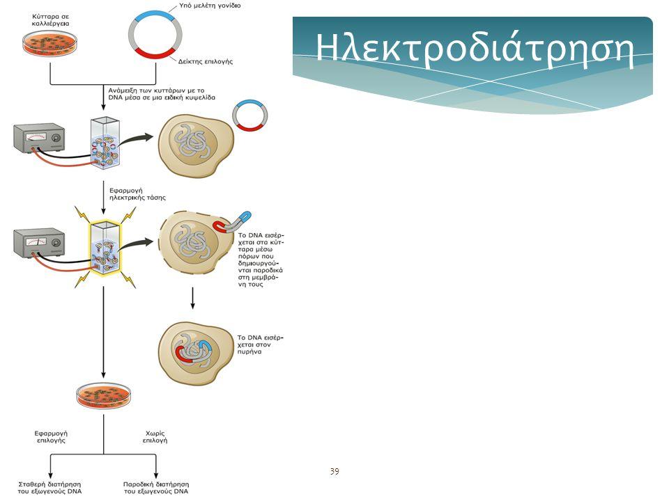 Βασική τεχνολογία GMOs39 Ηλεκτροδιάτρηση