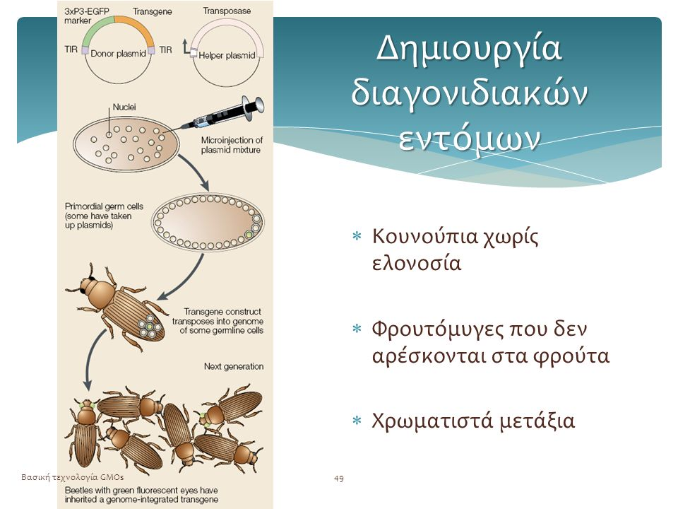 Δημιουργία διαγονιδιακών εντόμων Βασική τεχνολογία GMOs49  Κουνούπια χωρίς ελονοσία  Φρουτόμυγες που δεν αρέσκονται στα φρούτα  Χρωματιστά μετάξια