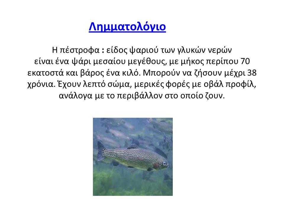 Η πέστροφα : είδος ψαριού των γλυκών νερών είναι ένα ψάρι μεσαίου μεγέθους, με μήκος περίπου 70 εκατοστά και βάρος ένα κιλό.
