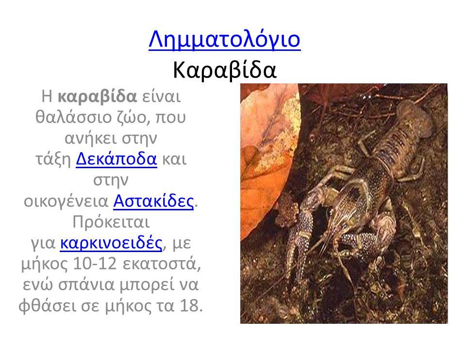 Λημματολόγιο Λημματολόγιο Καραβίδα Η καραβίδα είναι θαλάσσιο ζώο, που ανήκει στην τάξη Δεκάποδα και στην οικογένεια Αστακίδες.
