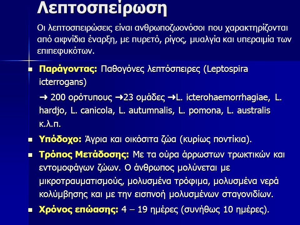 Λεπτοσπείρωση Παράγοντας: Παθογόνες λεπτόσπειρες (Leptospira icterrogans) Παράγοντας: Παθογόνες λεπτόσπειρες (Leptospira icterrogans) ➜ 200 ορότυπους ➜ 23 ομάδες ➜ L.