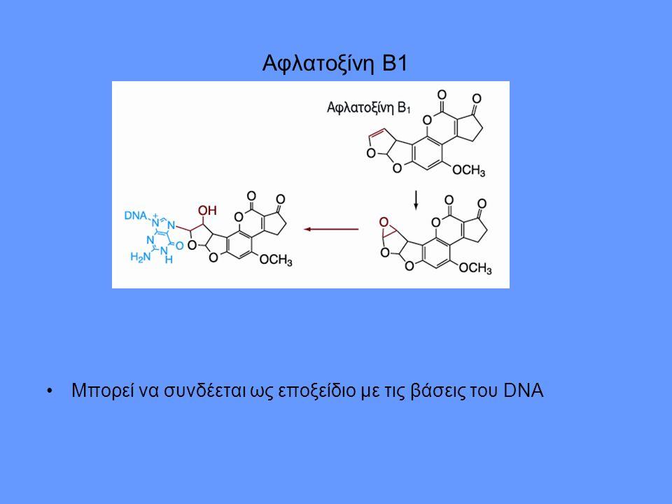 Αφλατοξίνη Β1 Μπορεί να συνδέεται ως εποξείδιο με τις βάσεις του DNA
