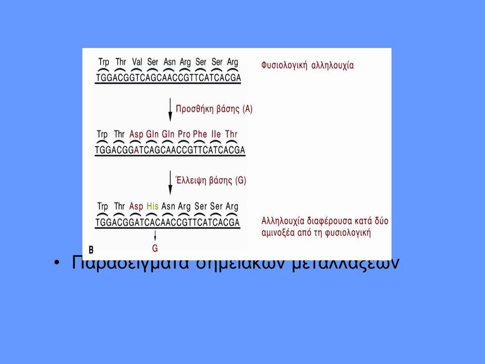 Παραδείγματα σημειακών μεταλλάξεων