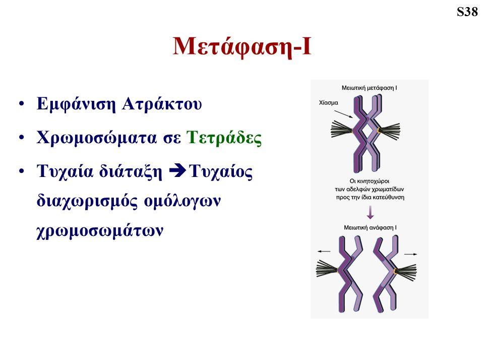 Μετάφαση-Ι Εμφάνιση Ατράκτου Χρωμοσώματα σε Τετράδες Τυχαία διάταξη  Τυχαίος διαχωρισμός ομόλογων χρωμοσωμάτων S38