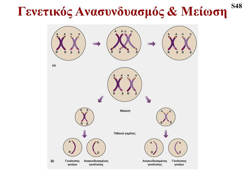 Γενετικός Ανασυνδυασμός & Μείωση S48
