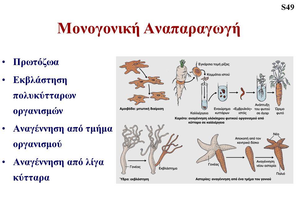 Μονογονική Αναπαραγωγή Πρωτόζωα Εκβλάστηση πολυκύτταρων οργανισμών Αναγέννηση από τμήμα οργανισμού Αναγέννηση από λίγα κύτταρα S49