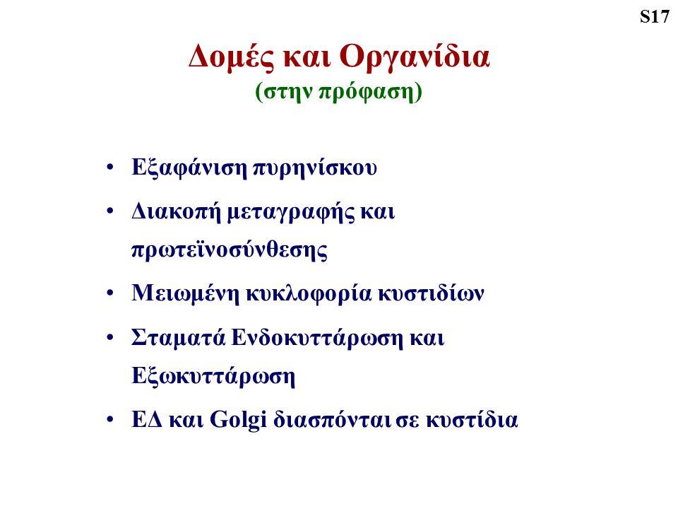 Στάδια Πρόφασης-Ι Ζυγοταινία Σύναψη ομόλογων χρωμοσωμάτων Συναπτονηματικό Σύμπλεγμα S33