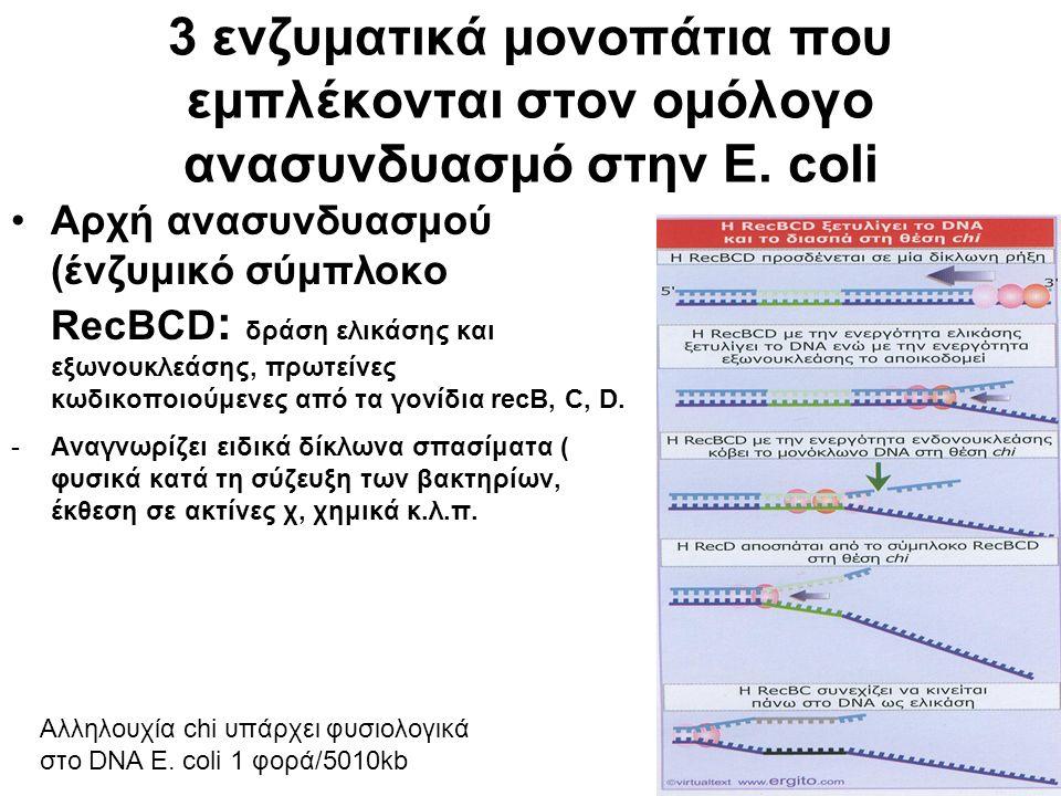 3 ενζυματικά μονοπάτια που εμπλέκονται στον ομόλογο ανασυνδυασμό στην E.