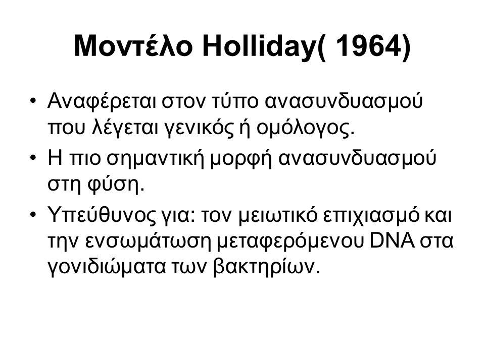 Μοντέλο Holliday( 1964) Αναφέρεται στον τύπο ανασυνδυασμού που λέγεται γενικός ή ομόλογος.