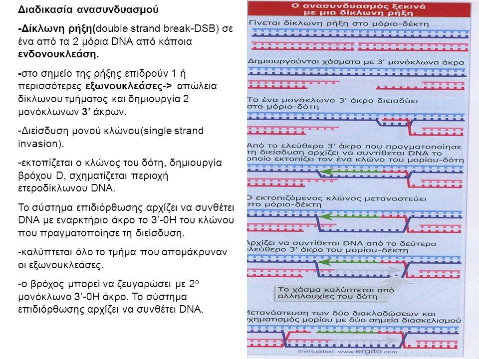 Διαδικασία ανασυνδυασμού -Δίκλωνη ρήξη(double strand break-DSB) σε ένα από τα 2 μόρια DNA από κάποια ενδονουκλεάση.