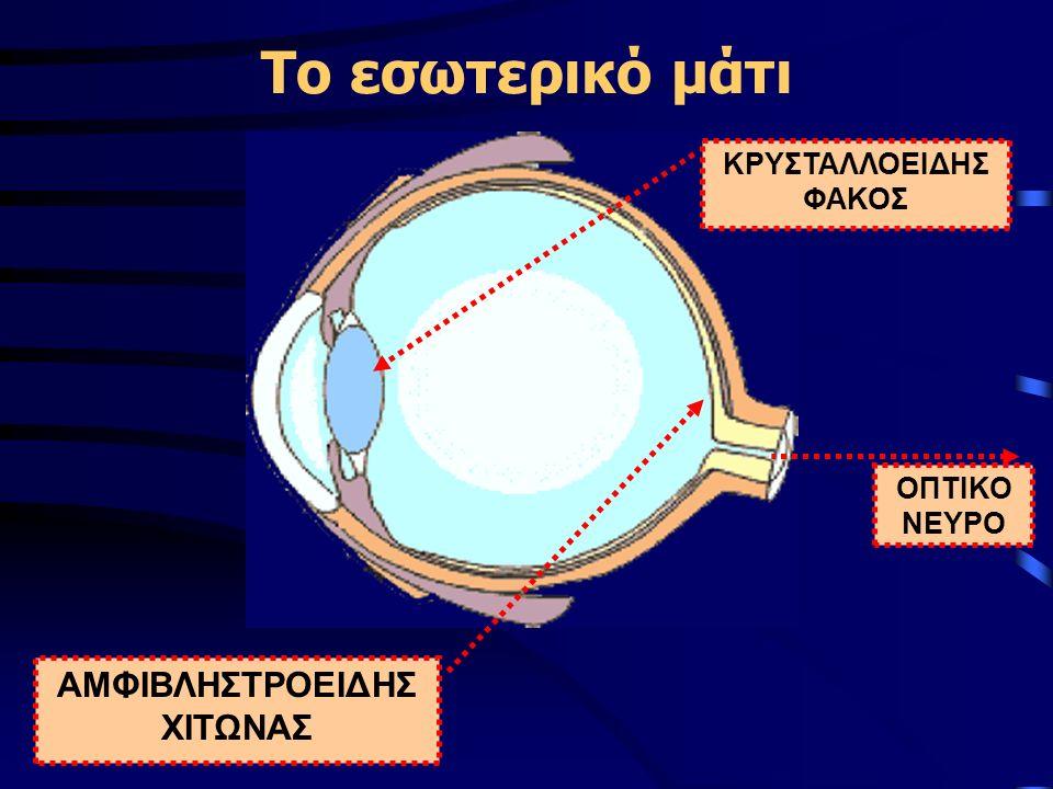 Το εσωτερικό μάτι ΟΠΤΙΚΟ ΝΕΥΡΟ ΑΜΦΙΒΛΗΣΤΡΟΕΙΔΗΣ ΧΙΤΩΝΑΣ ΚΡΥΣΤΑΛΛΟΕΙΔΗΣ ΦΑΚΟΣ