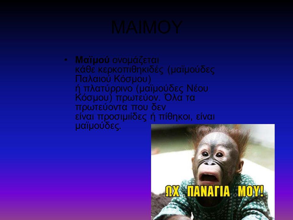ΜΑΙΜΟΥ Μαϊμού ονομάζεται κάθε κερκοπιθηκιδές (μαϊμούδες Παλαιού Κόσμου) ή πλατύρρινο (μαϊμούδες Νέου Κόσμου) πρωτεύον. Όλα τα πρωτεύοντα που δεν είναι