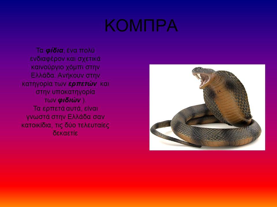 ΚΟΜΠΡΑ Τα φίδια, ένα πολύ ενδιαφέρον και σχετικά καινούργιο χόμπι στην Ελλάδα. Ανήκουν στην κατηγορία των ερπετών και στην υποκατηγορία των φιδιών ).
