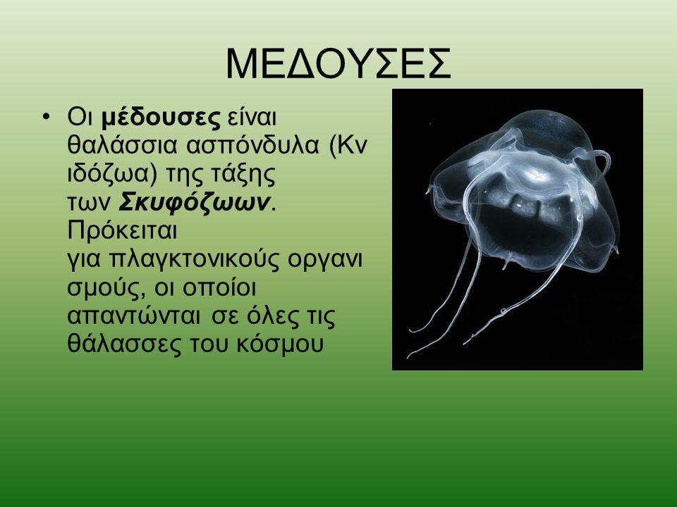 ΜΕΔΟΥΣΕΣ Οι μέδουσες είναι θαλάσσια ασπόνδυλα (Κν ιδόζωα) της τάξης των Σκυφόζωων. Πρόκειται για πλαγκτονικούς οργανι σμούς, οι οποίοι απαντώνται σε ό