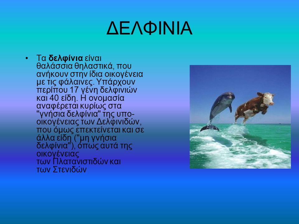 ΔΕΛΦΙΝΙΑ Τα δελφίνια είναι θαλάσσια θηλαστικά, που ανήκουν στην ίδια οικογένεια με τις φάλαινες. Υπάρχουν περίπου 17 γένη δελφινιών και 40 είδη. Η ονο