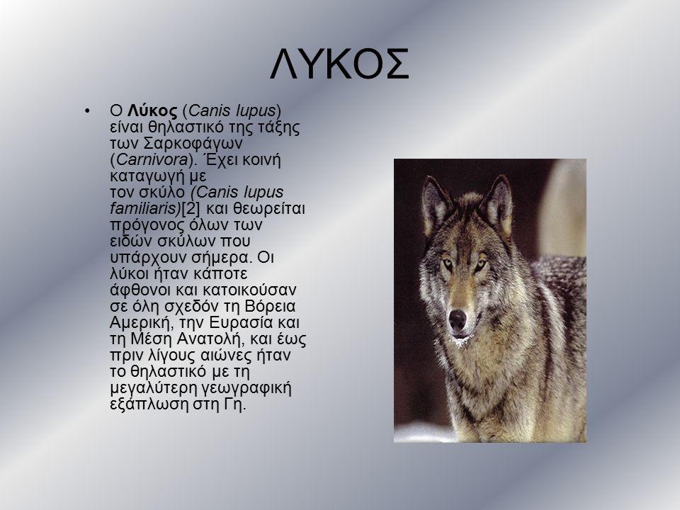 ΛΥΚΟΣ Ο Λύκος (Canis lupus) είναι θηλαστικό της τάξης των Σαρκοφάγων (Carnivora). Έχει κοινή καταγωγή με τον σκύλο (Canis lupus familiaris)[2] και θεω