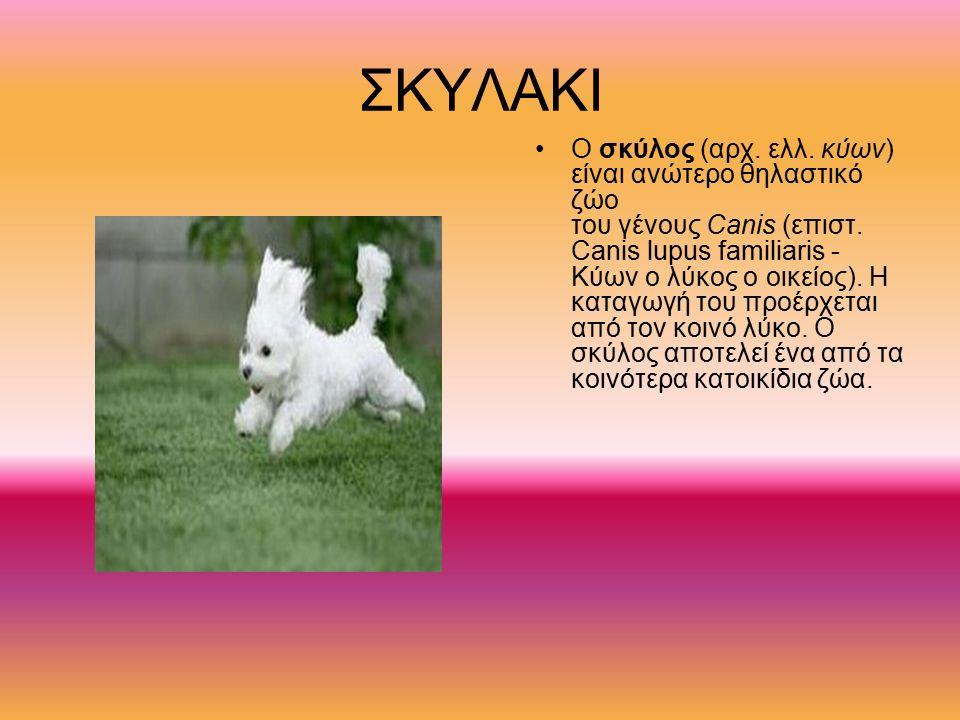 ΣΚΥΛΑΚΙ O σκύλος (αρχ. ελλ. κύων) είναι ανώτερο θηλαστικό ζώο του γένους Canis (επιστ. Canis lupus familiaris - Κύων ο λύκος ο οικείος). Η καταγωγή το